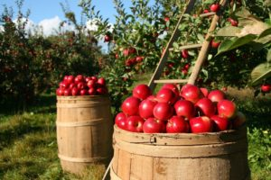 Apples. Eat so what. Smart Food blog by La Fonceur